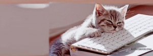 lazy-cute-sleeping-kitten-kitty-pussy-fur-ball-facebook-timeline-cover ...