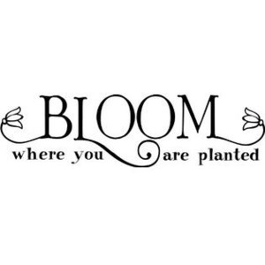 Wall Sayings Vinyl Lettering Bloom Where You Are Planted wall saying ...