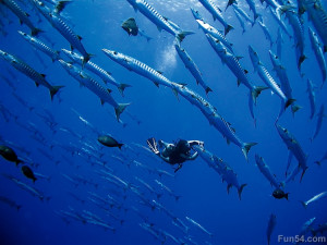 diver-under-the-sea-near-beautiful-small-fishs-group-with-blue ...