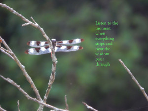 Learning to stop and listen might just save us from our own ...