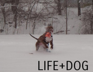 Dogs In Snow. Dog Thank You Sayings. View Original . [Updated on 12/9 ...