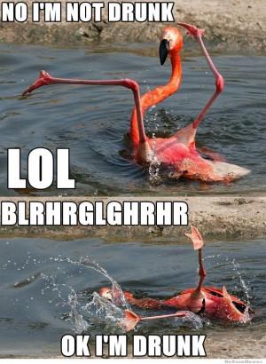 Drunk Flamingo – No I'm not drunk LOL Blrhrglghrhr Ok I'm Drunk