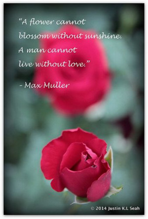 Love Blossoms....Max Muller