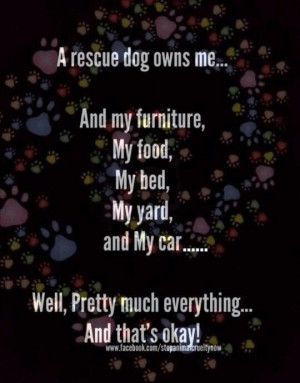 My rescue dog owns me