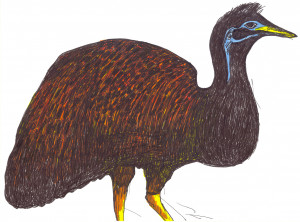 Kangaroo and King Island Emus | A Field Guide to Extinct Birds