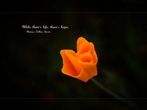 Wallpaper: Quotes-While Theres life theres hope quote wallpaper