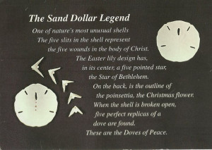 Quotes About Sand Dollars Quotesgram