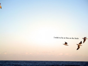 birds,bird,freedom,flight,quotes,free-dbae6adbc2b523f4728de63a3f3fbe47 ...