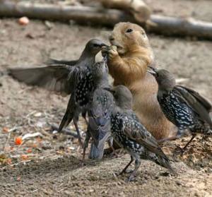 Funny photos funny squirrel eating nut birds