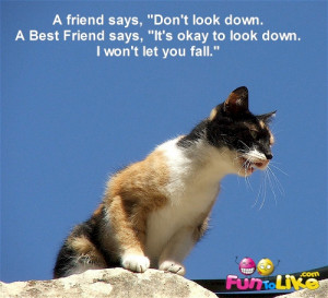 """... Friend says, """"It's okay to look down. I won't let you fall"""