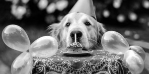 ... funny happy bir happy birthday your guide to h hippo and dog h