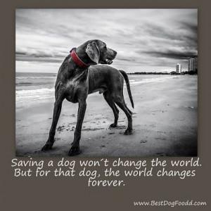 Dog Sympathy Quotes