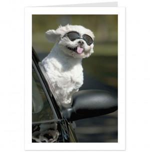 Congratulations funny dog - photo#45