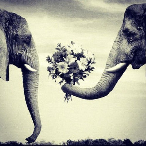 cute, elephants, love, quotes, tumblr