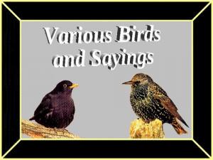 Birds And Sayings screenshot