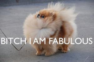 bitch, dog, fabulous, funny