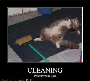 funny-pictures-cleaning-is-very-hard.jpg
