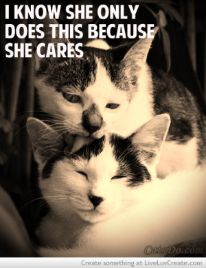 cute cat love quotes