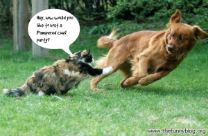 Dogs and Cats Living Together = Mass Hysteria! Take a Look at These ...