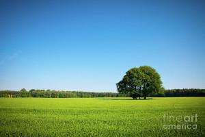 Blue Sky Green Grass Photograph