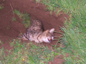 Dead Cats Funny Pictures