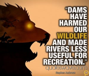 Dams have harmed our wildlife and made rivers less useful for ...