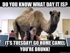 184744-Its-Tuesday-Go-Home-Camel-You-re-Drunk-.jpg