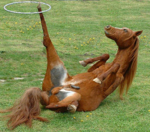 funny-horse-pic
