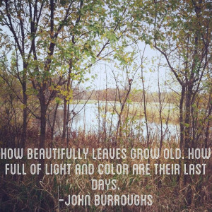 How beautifully leaves grow old. How full of light and color are ...