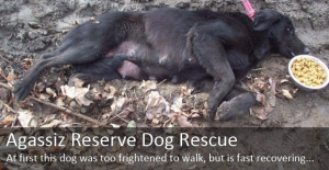 Dog Rescue Stories - Reserve Dogs