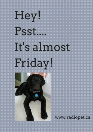 We're almost there - Friday is close! #dogs #canine #pets #quotes # ...