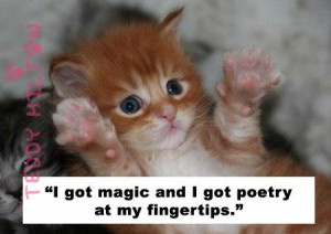 CAt Quotes Sheen 1