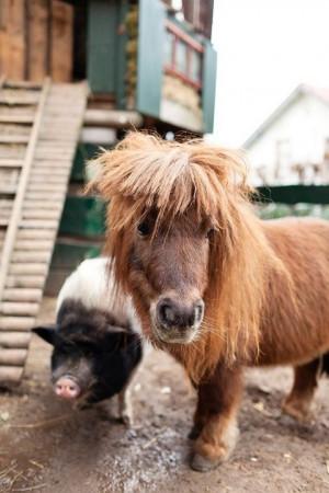 Cute horse! slightly bigger than a pig!