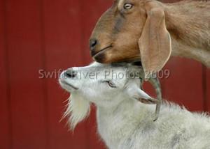 Photography of Terri Buckley (Stewart) » Animals