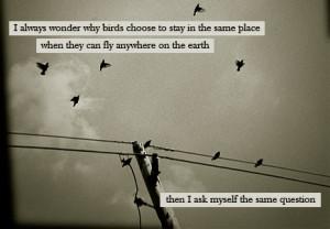 Birds quotes, larry bird quotes, bird quote