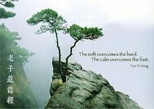 Taoism Quotes Hard taoism quote postcard