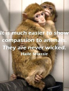 Animal quotes and animals lovers' quotes on Pinterest   Animal Quotes ...