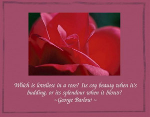 Quotations About Roses