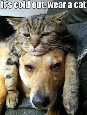 Funny Cats and Dogs: It's cold out! Wear a cat!