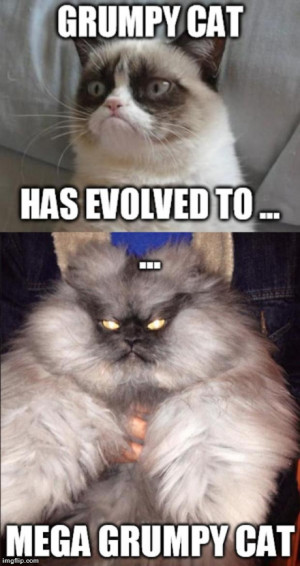 ... grumpy cat | image tagged in memes,grumpy cat,funny | made w/ Imgflip