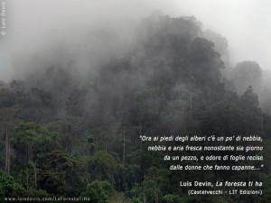 Nebbia tra gli alberi della foresta equatoriale (Camerun).