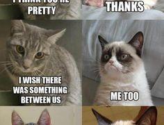Wallpaper Title: Grumpy Cat Quotes sandizone − May 1, 2014 cat