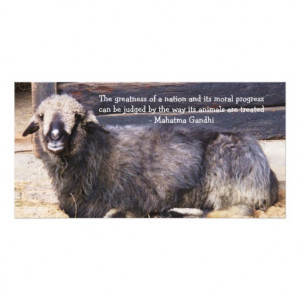Animal Rights Gandhi QUOTE Photo Cards