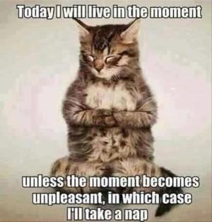 funny cat quotes