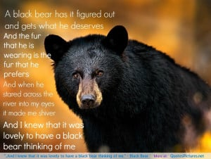"""... it was lovely to have a black bear thinking of me."""" – Black Bear"""