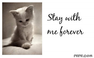 Stay with Me Forever Quotes