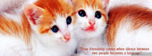 tags cat quotes sayings cute myfbcovers com is the original