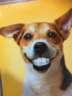 happy monday happy dog happy dog happy dog happy dog happy dog