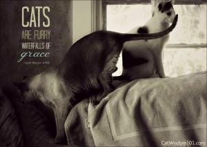 cat-quote-art