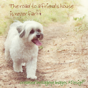 Animal Quotes Inspirational Quotes Quot gt Animal Quotes lt a gt